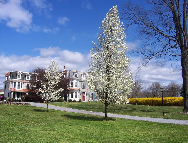 new hope pa bed and breakfast inns