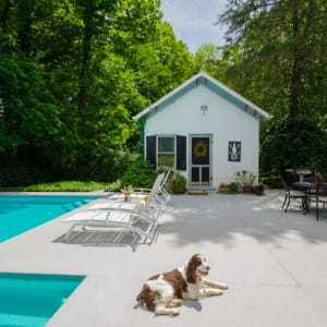 outdoor pool area with dog