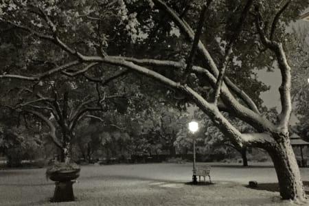 Snow in Bryan in November???