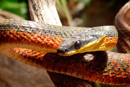 Gandoca-Manzanillo Wildlife Refuge