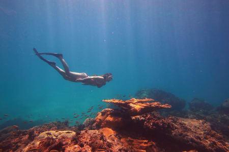 Manzanillo - Reefs & Sea Life