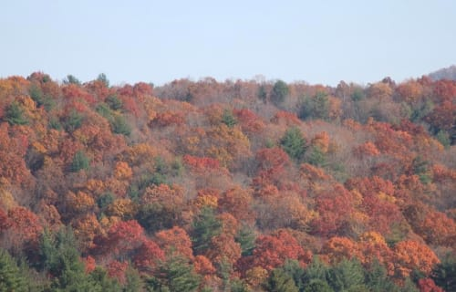 IT'S TIME: THE LEAVES ARE CHANGING