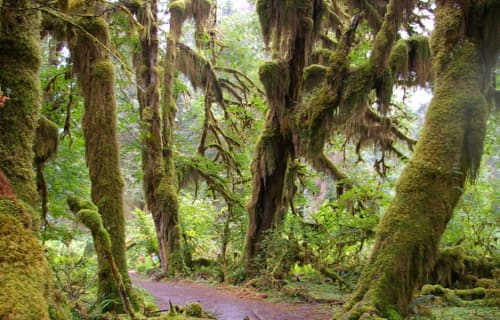 Day 2: Hoh Rain Forest and Forks