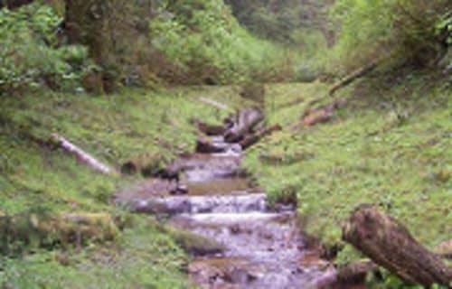 The Willapa National Wildlife Refuge Walk on February 13th