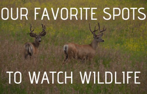 Our Favorite Spots to Watch Wildlife