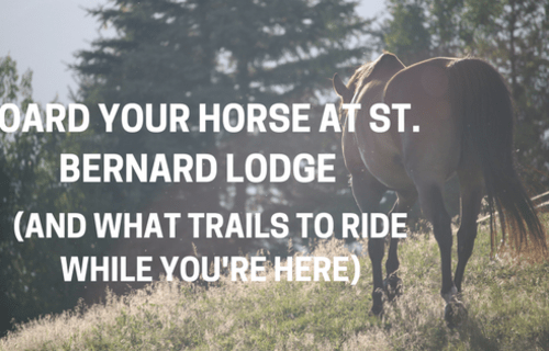 Board Your Horse at St. Bernard Lodge (And What Trails to Ride While You're Here)