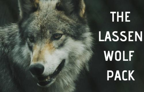 Meet the Lassen Wolf Pack