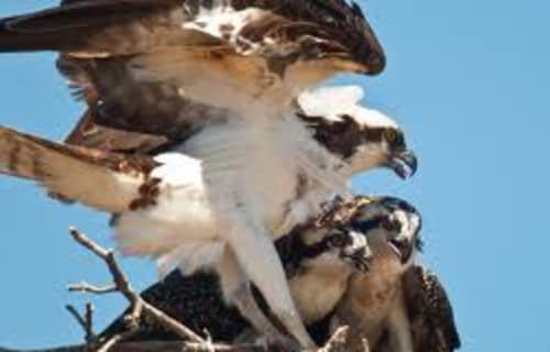 Learn about the Amazing Birds of Lassen Volcanic National Park