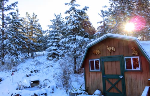 Winter Weather brings May flowers to Bear Spirit Lodge