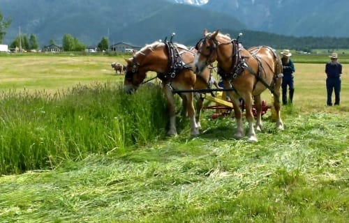 Progressive Horse Days near Bear Spirit Lodge June 7th