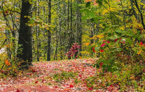 Fall Foliage - Maine's Fifth Season