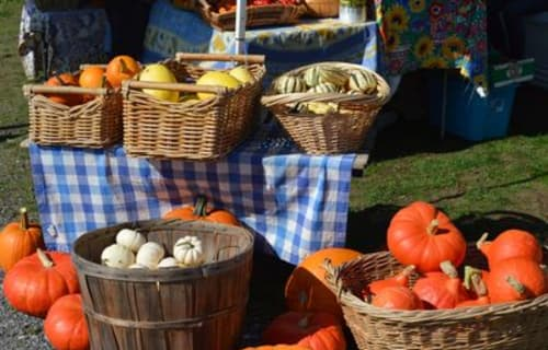 Farmers Market in Eastsound