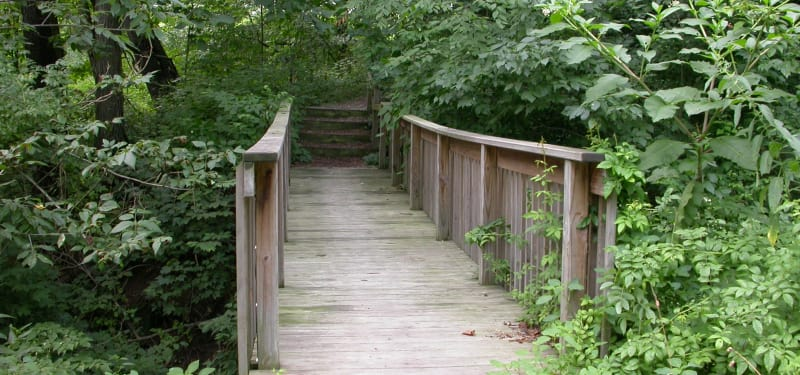 bridge leading to cabin