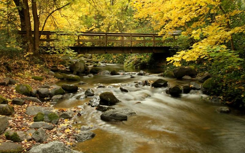 Lithia Park Nature Walks