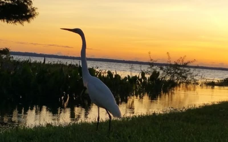 Nature for City Girls in Green Cove Springs