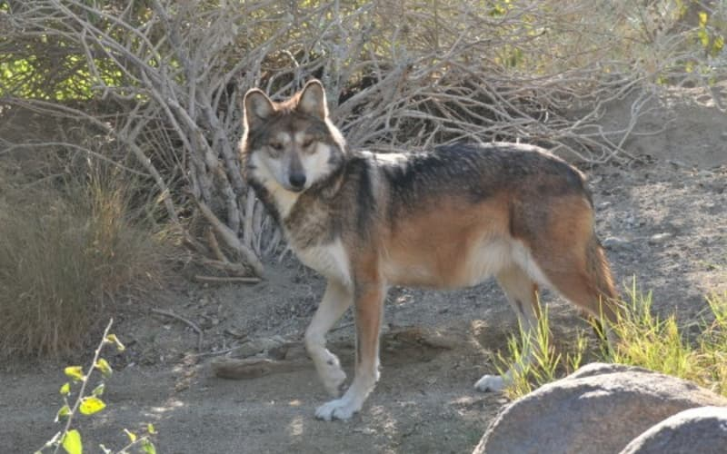 3 Reasons You'll Love The Living Desert