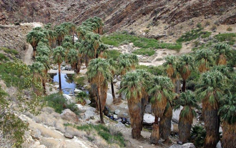 4 Best Oasis's in Palm Springs