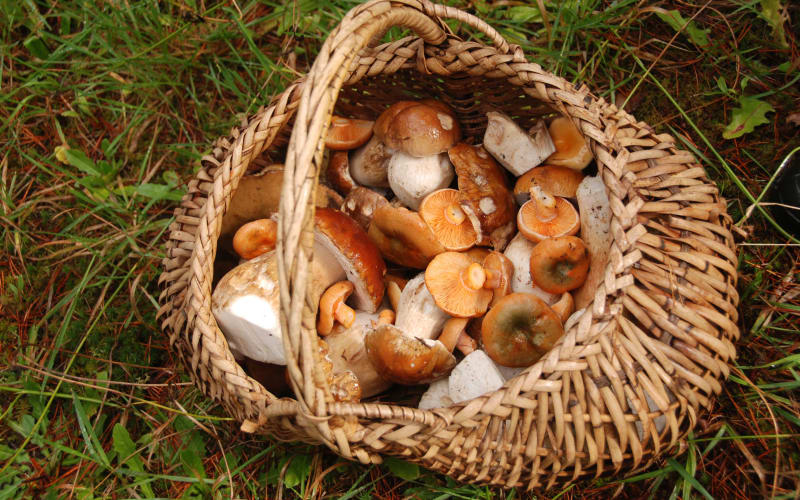 Wild Mushroom Celebration 2018