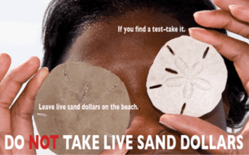 Sand Dollars: Take the Test