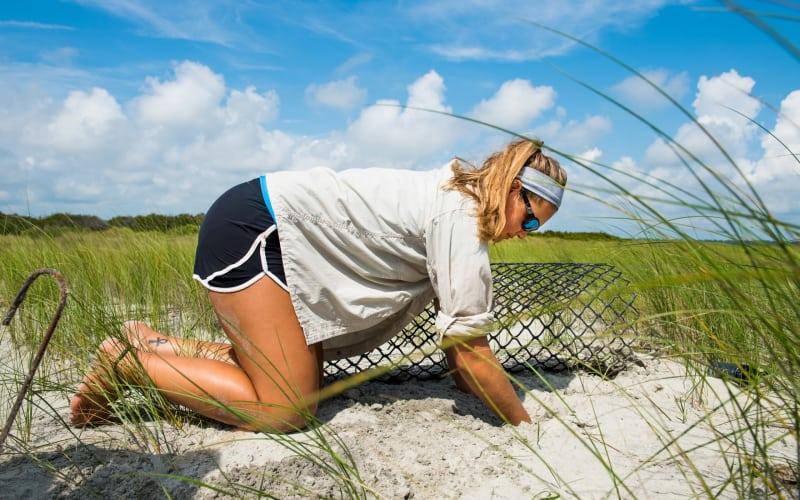 Sea turtle season is underway!