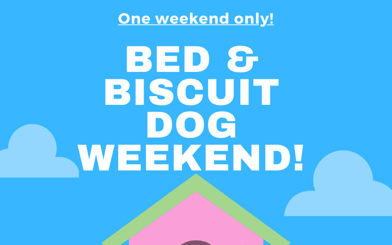 Bed & Biscuit Dog Weekend at The Lion and the Rose
