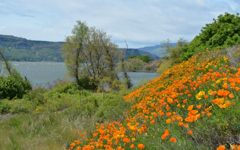 5 Wildflower Hikes for Soaking up some Sun