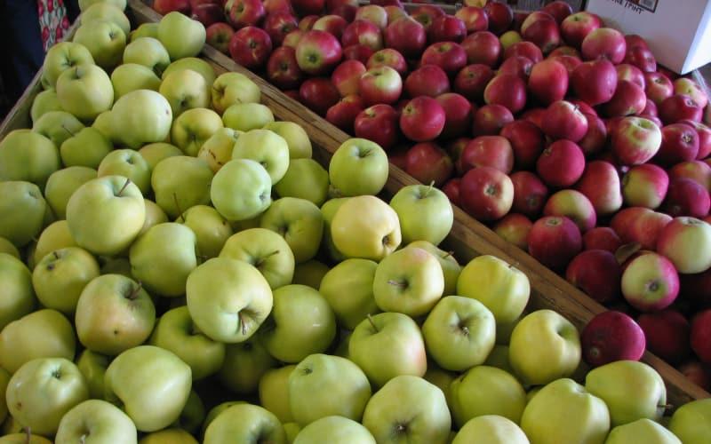 Gravenstein Harvest Kicks Off the Hood River Valley Harvest