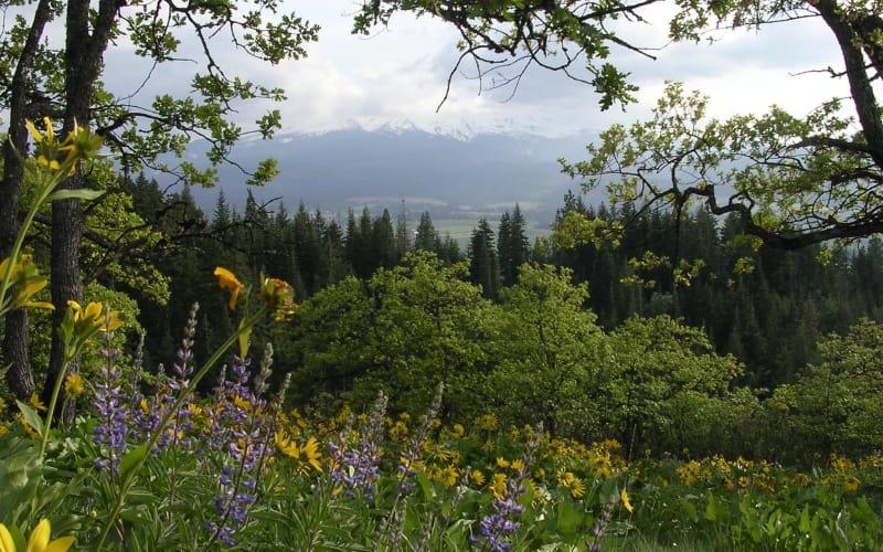 Bald Butte Via the Oak Ridge Trail #668A