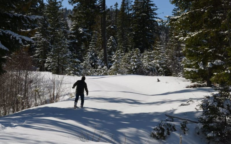 5 Places near Parkdale For Winter Snowshoeing