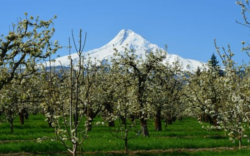 Spring in the Hood River Valley