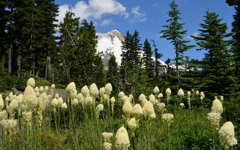 Mt Hood Meadows Summer Schedule