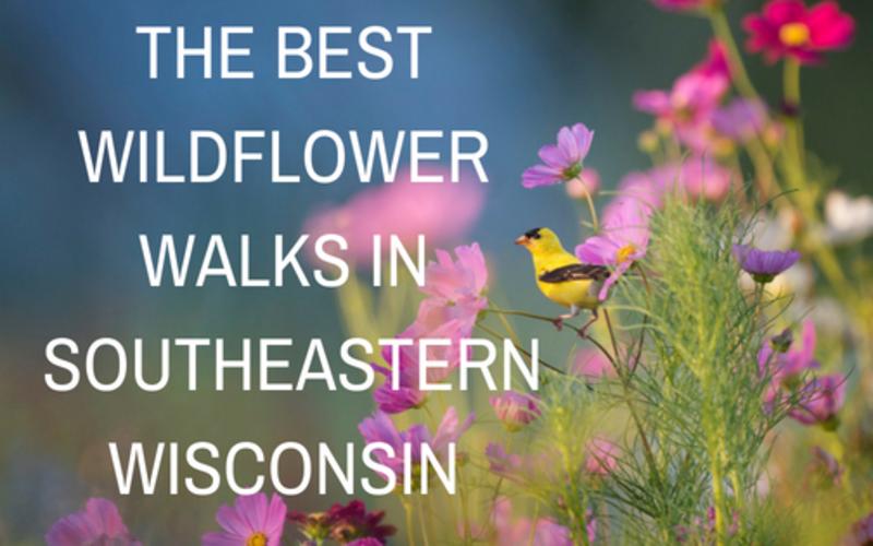 The Best Wildflower Walks in Southeastern Wisconsin