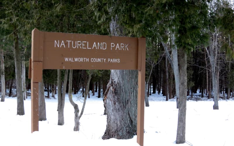 Snowshoeing at the Natureland County Park