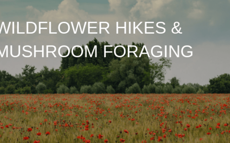Wildflower Hikes & Mushroom Foraging