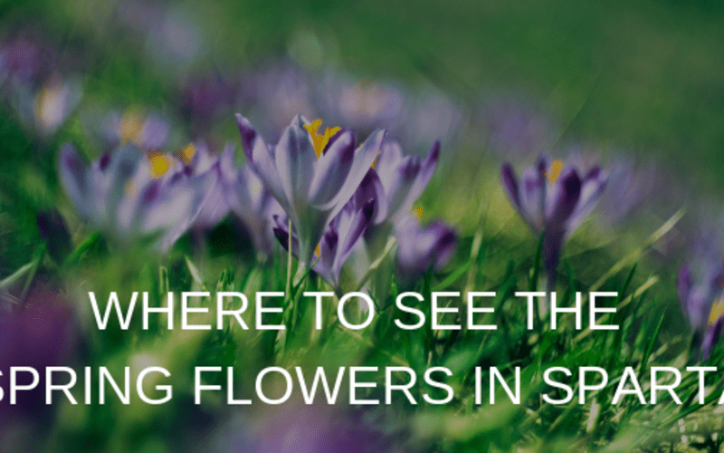 Where to See the Spring Flowers in Sparta