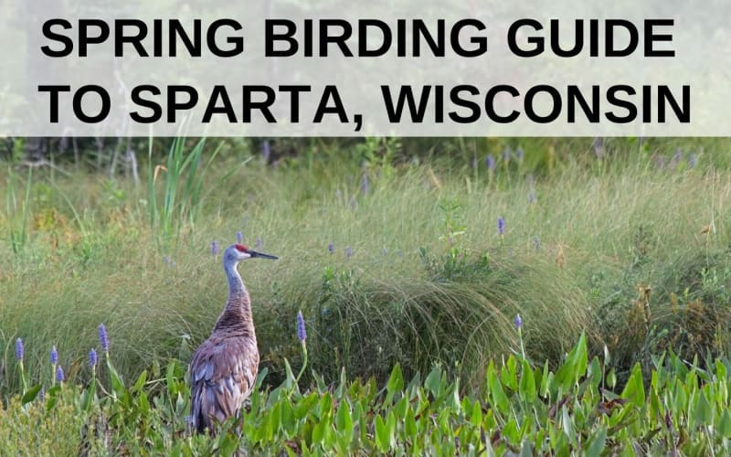 Spring Birding Guide to Sparta, Wisconsin