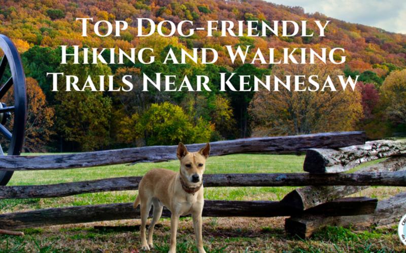 Top Dog-friendly Hiking and Walking Trails Near Kennesaw, Georgia
