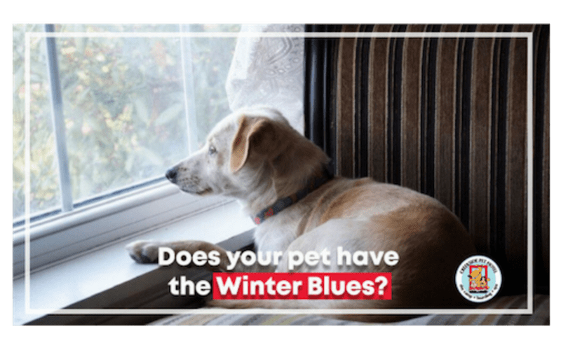 8 Tips to Keep Your Pet Entertained Indoors During Winter