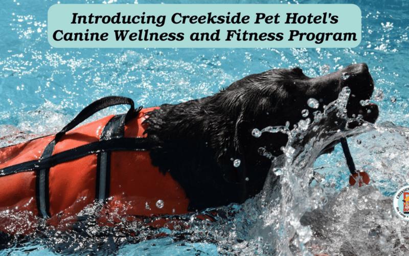 Canine Wellness and Fitness Program