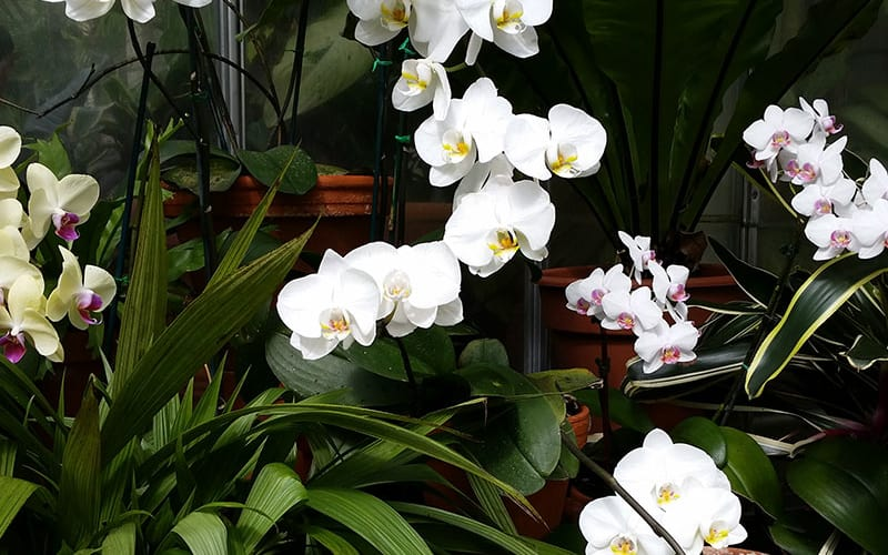 More Beauty at Biltmore Conservatory