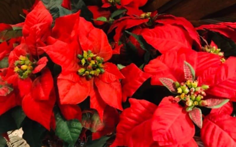 Christmas Menu at the Albemarle Inn!