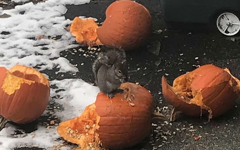 Recycling Pumpkins