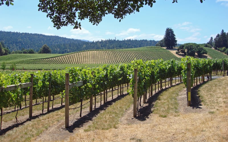 Our Top 5 Anderson Valley California Vineyards and Wineries