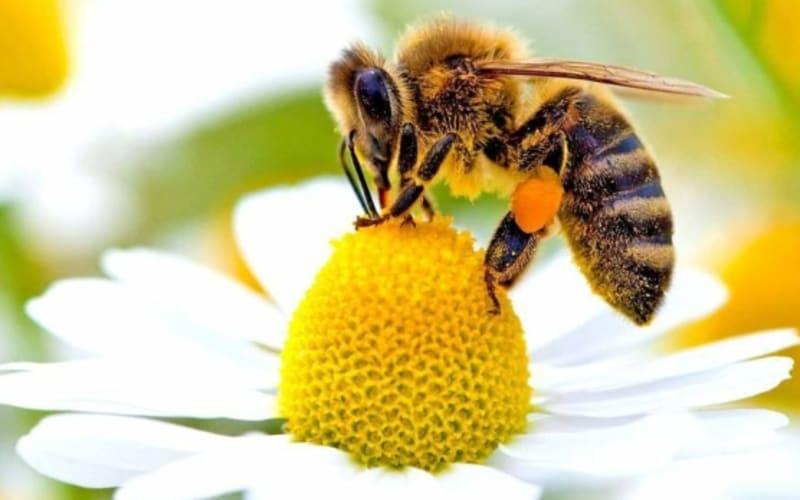 We're Getting Honey Bees ...