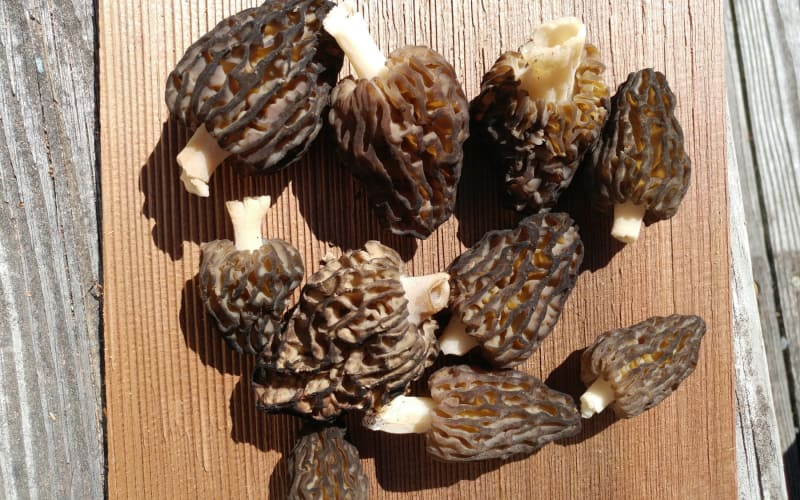 Mid April Morels: Musings From a Town in Transition