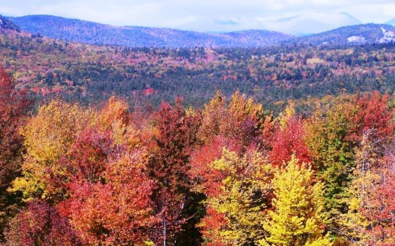 Fine Fall Foliage at the Darby Field Inn