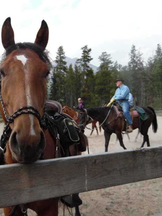Ranch, Guests, and Horses