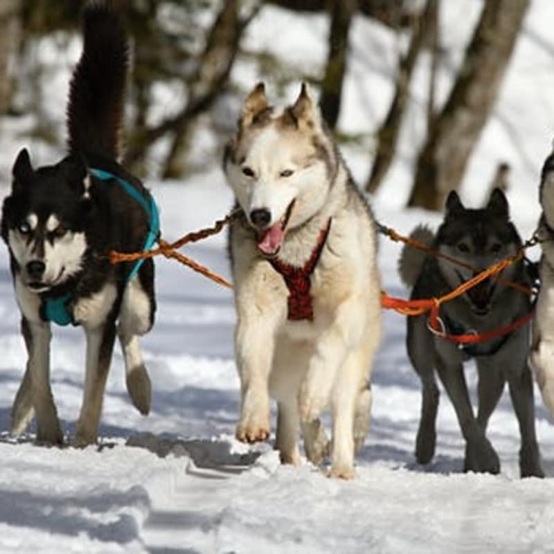 There are dog sledding venue, horse driven sleighs,  and fabulous Vermont Winter activities.... Design your own Winter Wonderland Fun!  WE ARE THE ONLY HISTORIC INN TAKING PET FRIENDLY RESERVATIONS!