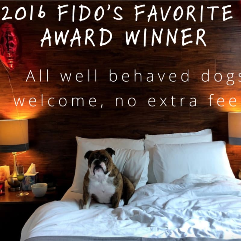 2016's Fido's Favorite Award Winner