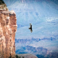 experience nature of the GRAND CANYON - STAY WITH  SEDONA VIEWS B&B